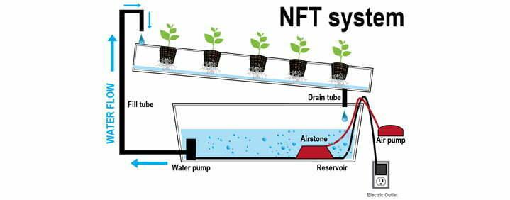 Nutrient film hydroponics system cannabis