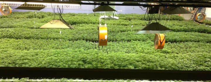 Open circuit hydroponics system cannabis