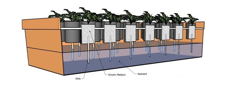 Passive hydroponics system weed