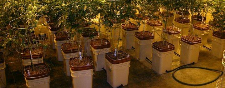 Static hydroponics system cannabis