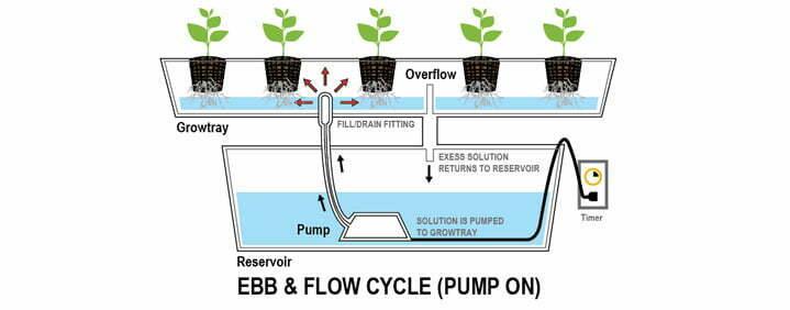 ebb flood hydroponics system weed