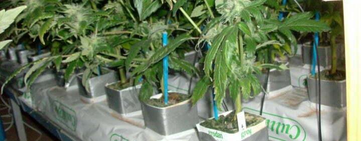 rockwool hydroponic growing