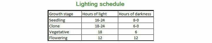 Hours light marijuana