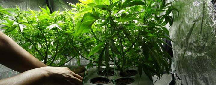 stress free growing