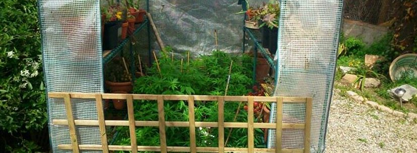 small greenhouse for growing weed