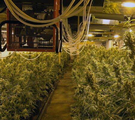 Cannabis ventilation system