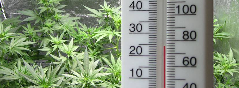 Lower temperature in grow room weed