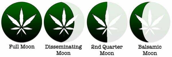 harvesting weed moon