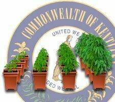 grow weed kentucky