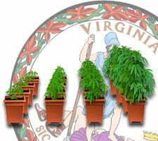 growing cannabis in virginia