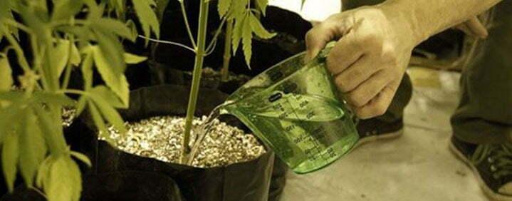 marijuana nutrient flush