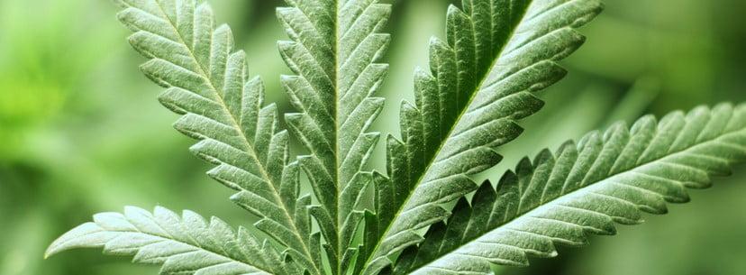 Marijuana, Treatments For Fibromyalgia
