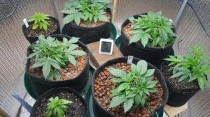 Baby plants