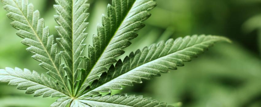 Medical_Marijuana