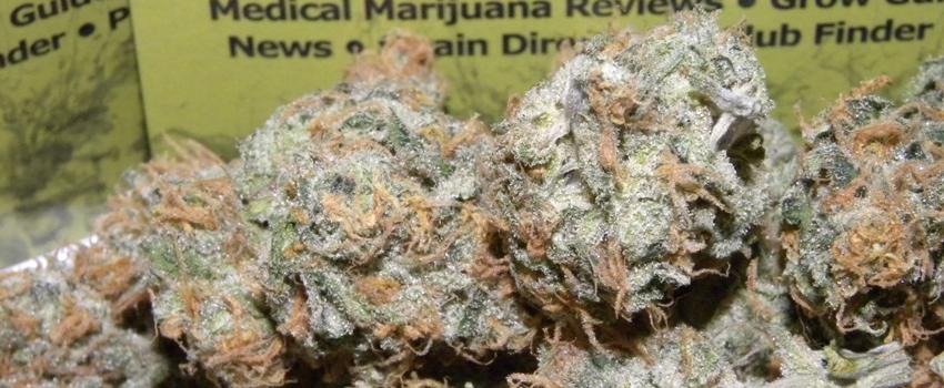 Tangerine Haze Medical