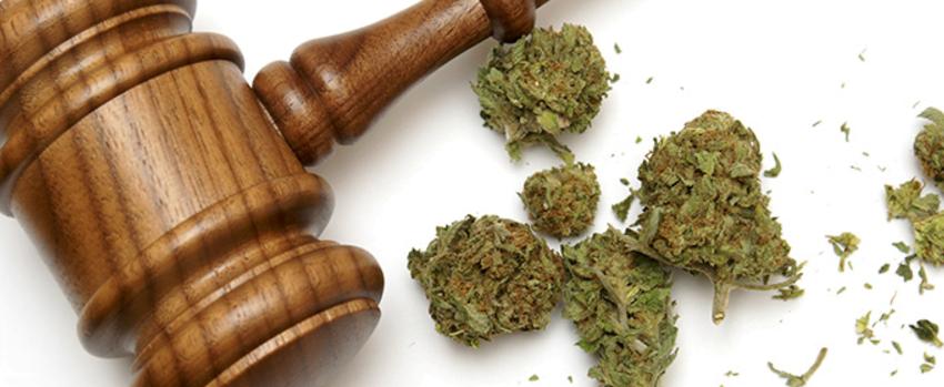 Breaking_Marijuana_Laws_001