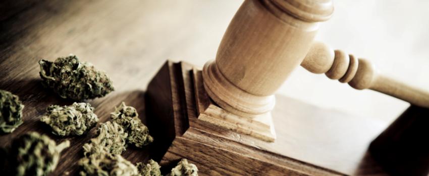 Breaking_the_Marijuana_Law