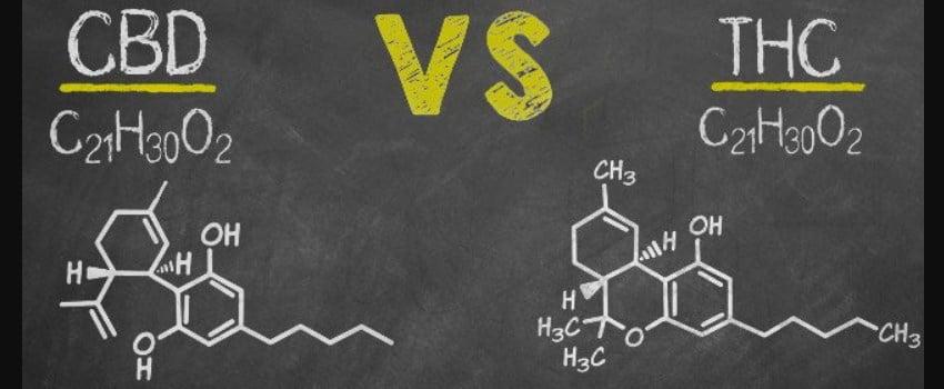 CBD vs. THC