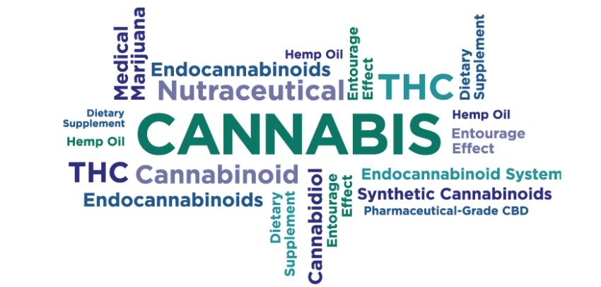 Case Study: Marijuana, Endocannabinoids & Epilepsy