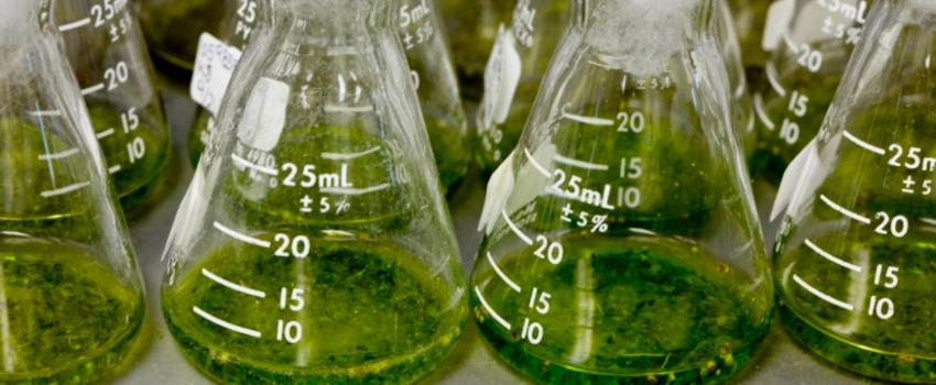 Medical Research on Medical Marijuana