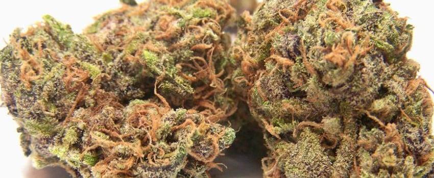 Purple Buddha Effects