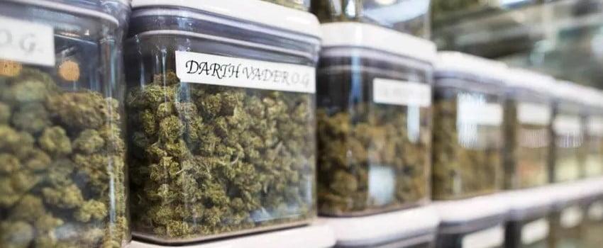 Marijuana Business in California