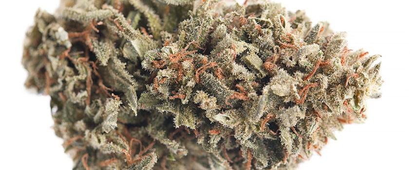 Pineapple Skunk Medical