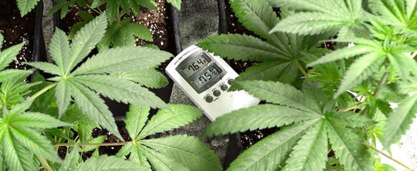 Maintain Optimal Temperature