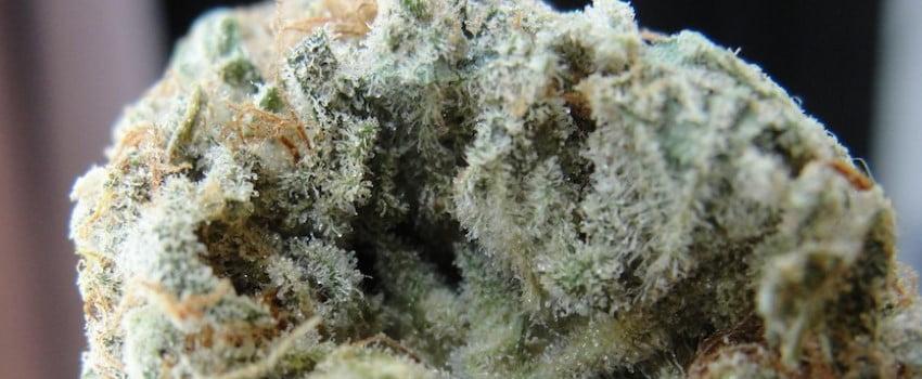 Frosted Freak Medical