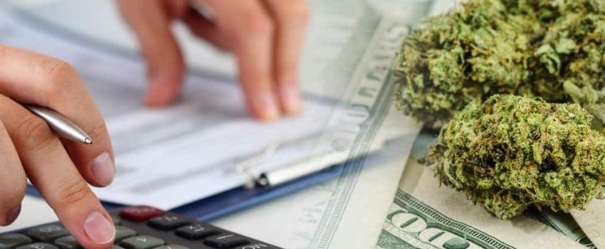 cannabis business operators