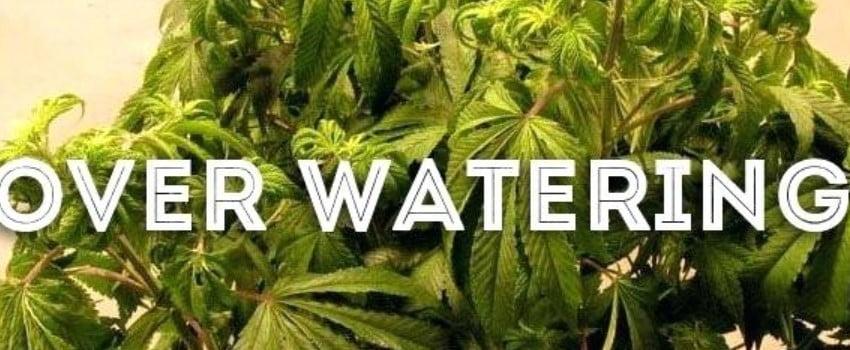 How to stop overwatering