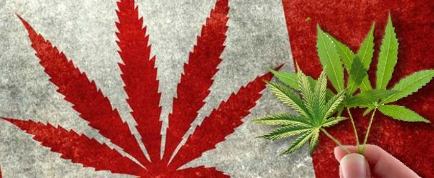 Legalization of Marijuana in Canada