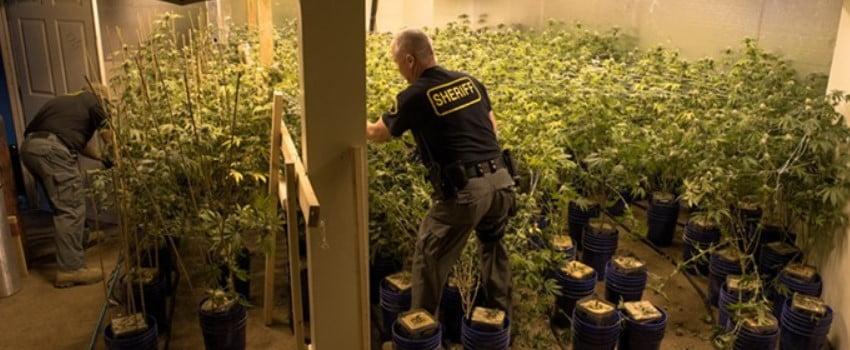 Los Angeles Cannabis fake raid